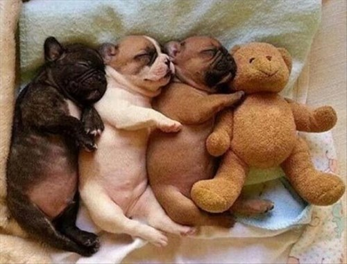 cute cuddles snuggle puppies teddy bear - 8274928384