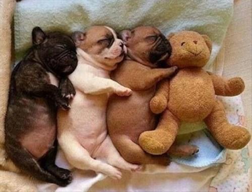 cute cuddles snuggle puppies teddy bear - 8274928384