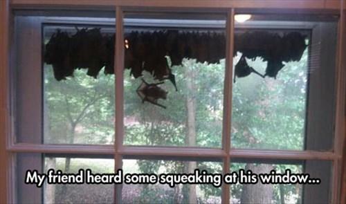 bats,creepy