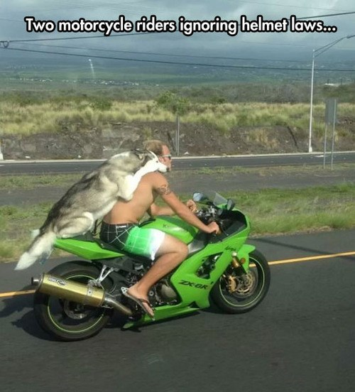 dogs motorcycle helmet