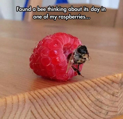 bees,cute,puns,thinking