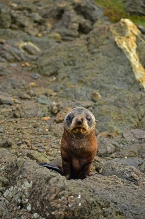 cute seals - 8274948608
