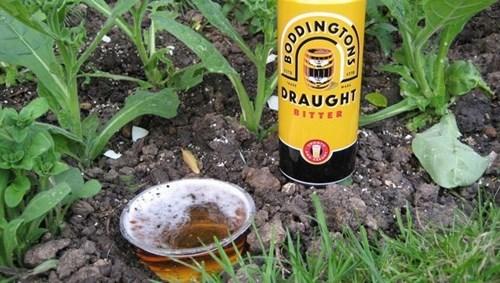 beer clever strange funny - 8275016704