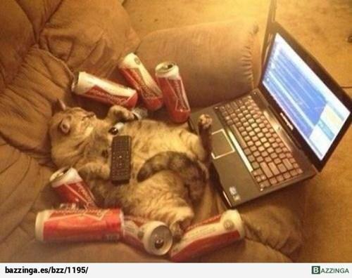 gatos bromas animales fotos - 8275046912