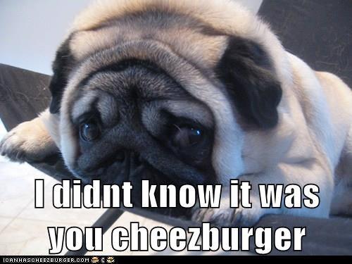 Cheezburger Image 8275934208