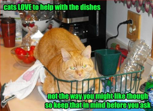 cats LOVE to help with the dishes not the way you might like though so keep that in mind before you ask
