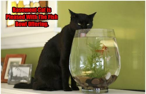 fish Cats - 8276746240