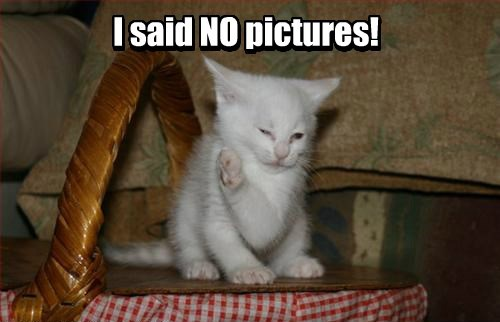 pictures,kitten,Cats