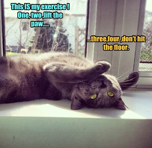 This IS my exercise ! One, two ,lift the paw..... ...three,four ,don't hit the floor.