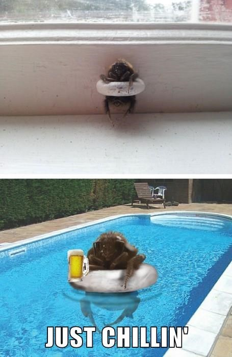 summer,photoshop,bees,pools,funny