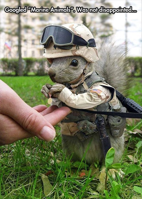 puns squirrels marines funny google - 8277757952