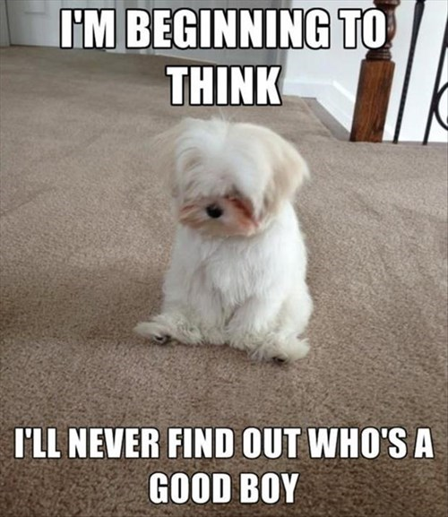 dogs cute deep funny - 8277763840