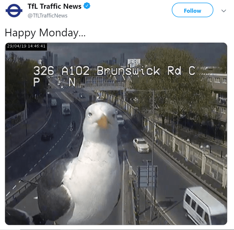 seagull in front of a traffic camera