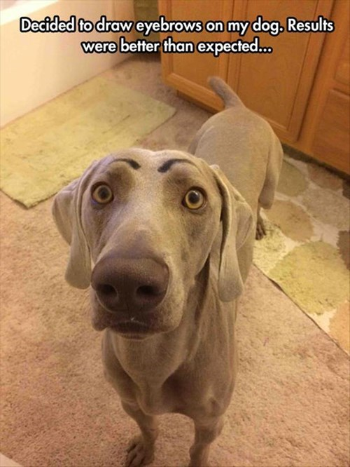 Dog - Decided to draw eyebrows on my dog. Results were better than expected...