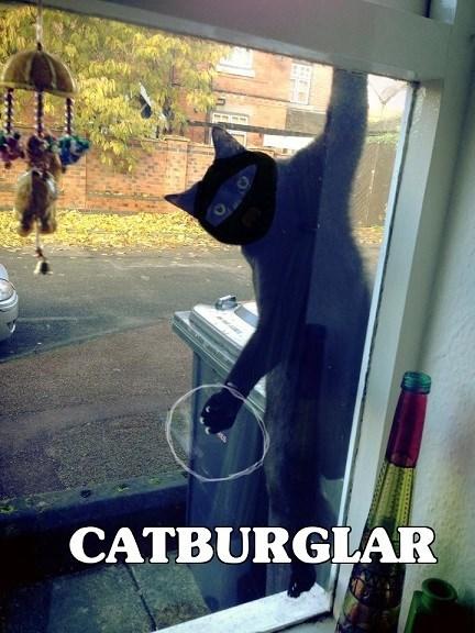 Cat Burglar,Cats