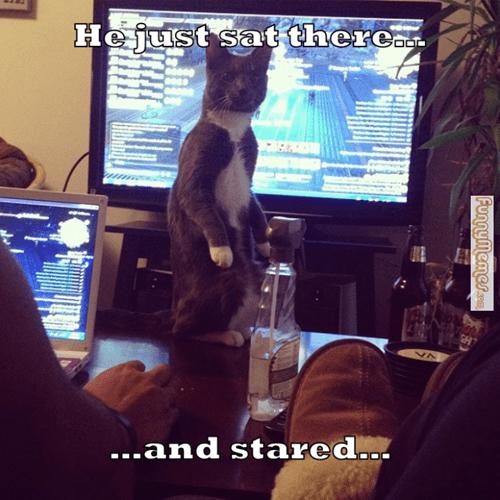 Cats,funny,interrupt