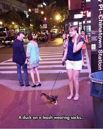 leash ducks funny weird - 8277783296