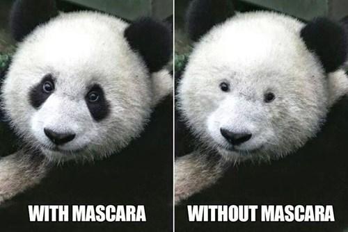 makeup,panda,mascara