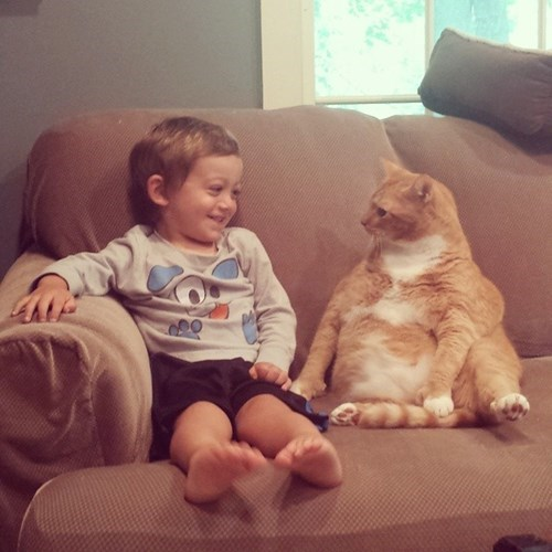 smiling kids Cats funny - 8277794048
