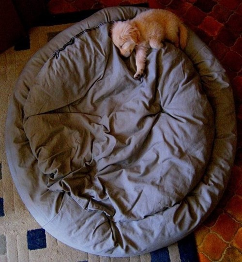 tiny puppies cute dog bed - 8277795328