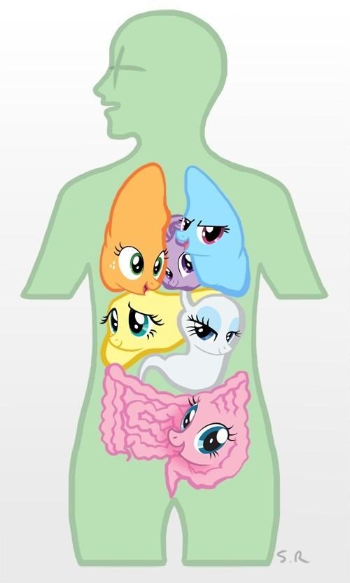 anatomy mane 6 organs - 8278008576