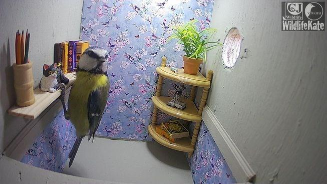 bird inside a miniature room
