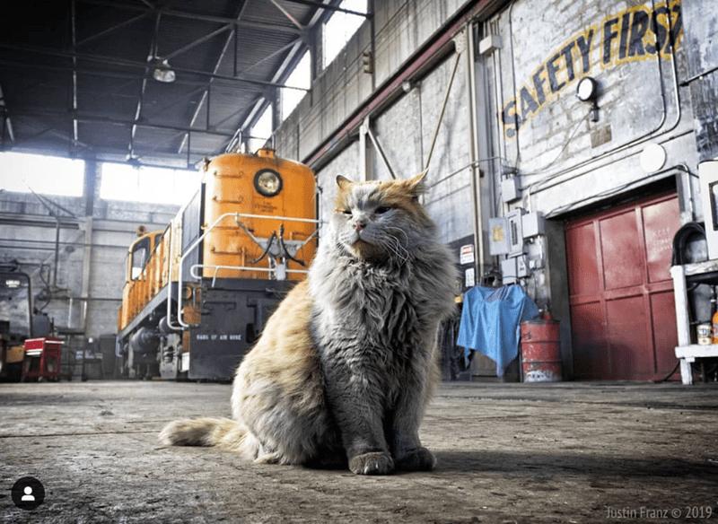 mascot railway Nevada Cats museum - 8278277