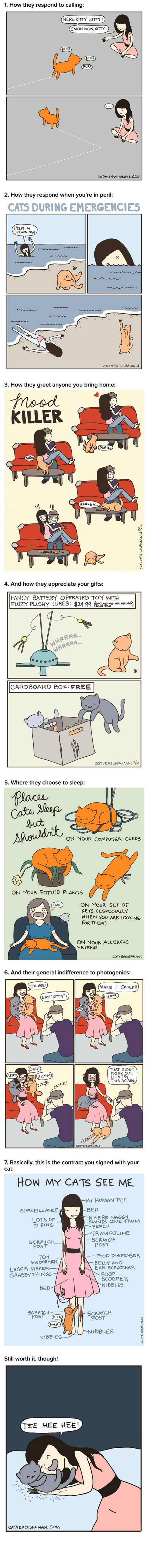 list,Cats,web comics
