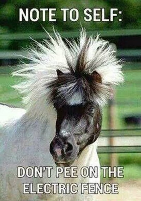 bad hair shocked horses funny - 8278691072
