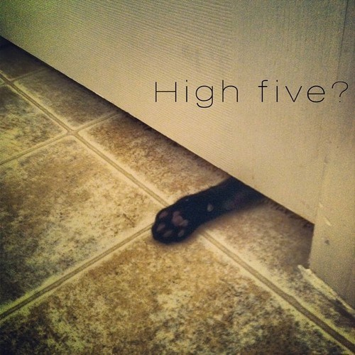 bathroom high five Cats