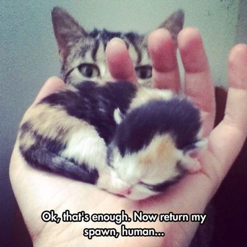 kitten minecraft Cats - 8278734848