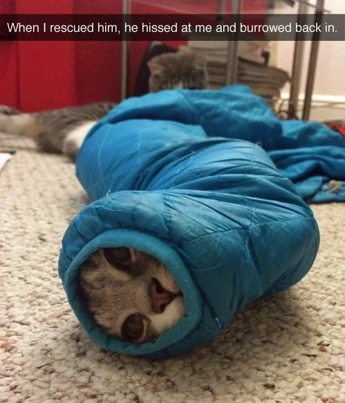 sleeve hiss if i fits i sits Cats funny - 8278738176