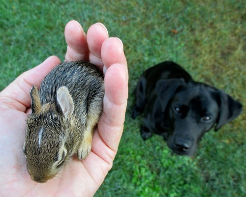 bunnies Babies dogs mine cute squee - 8278752256