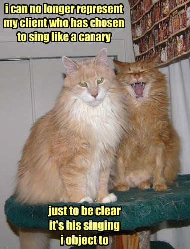 singing confess Cats - 8279029504
