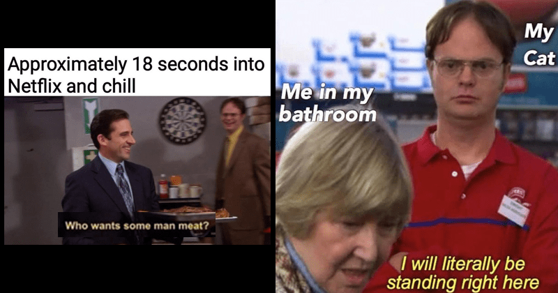 Funny memes, the office, cat memes, the office memes, office memes, michael scott, dwight schrute.