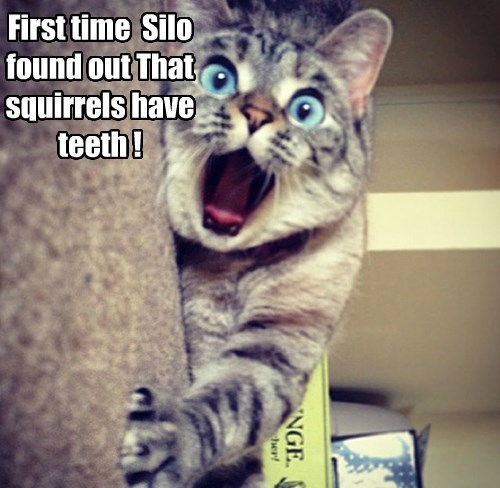 First time  Silo found out That squirrels have teeth !