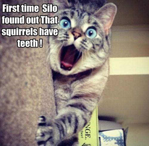 squirrels Cats funny - 8279634176