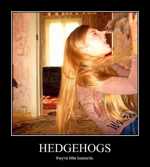 bastards nose hedgehog funny - 8279664384