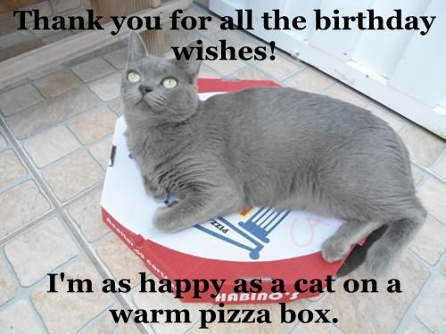 Thank You For All The Birthday Wishes Im As Happy A Cat On