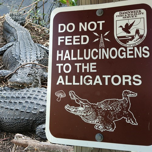 sign wtf drugs alligators Mushrooms - 8279767808