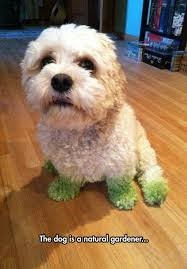 dogs cute grass funny - 8279801600