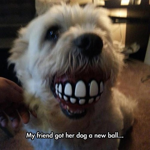 dogs,smiling,toys,funny