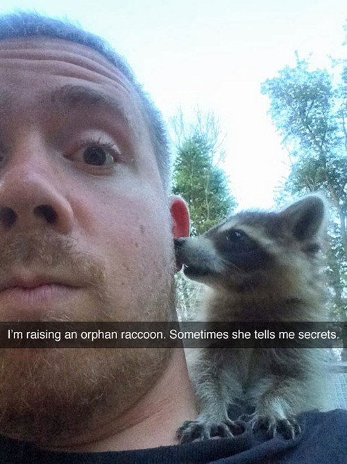 cute,secrets,raccoons