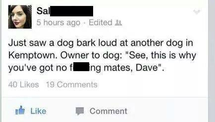 dogs twitter pets - 8279934976