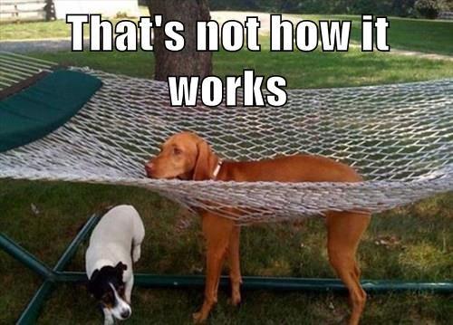 dogs hammocks funny - 8280531968