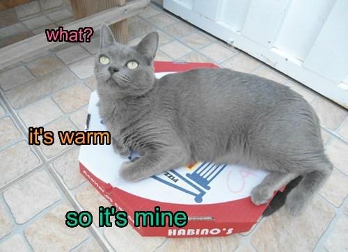 pizza Cats funny warm - 8280706816