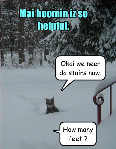 snow,help,Cats,lost