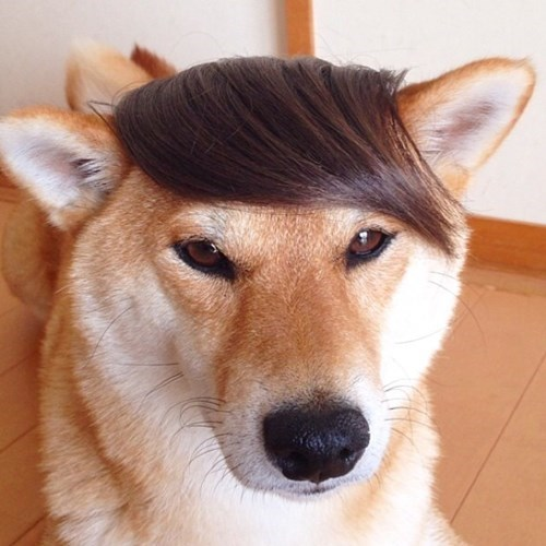 hair dogs poorly dressed - 8280847360
