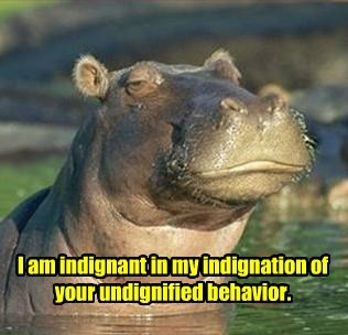 hippos sophisticated cute dignified proper