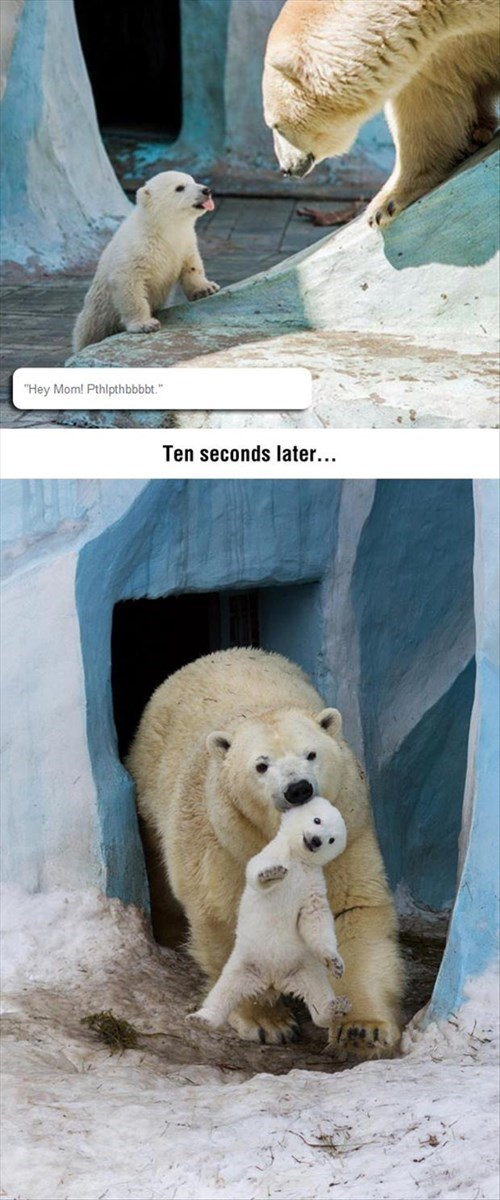 kids,polar bear,parenting,tongue out
